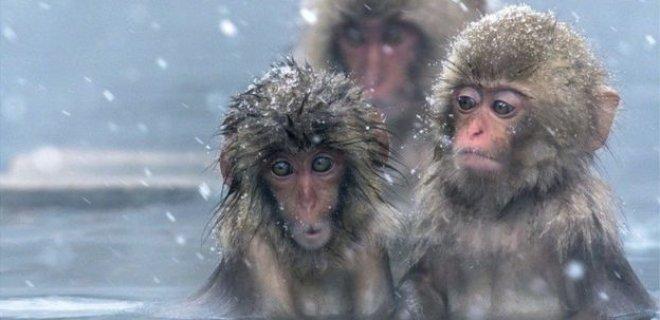 maymunlar-kari-seviyor.jpg