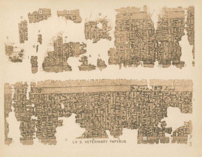misir-papirusu,-timsah-diskisi.jpg