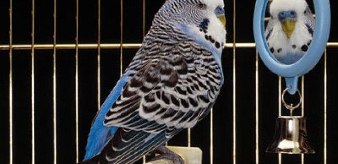 kuş ayna