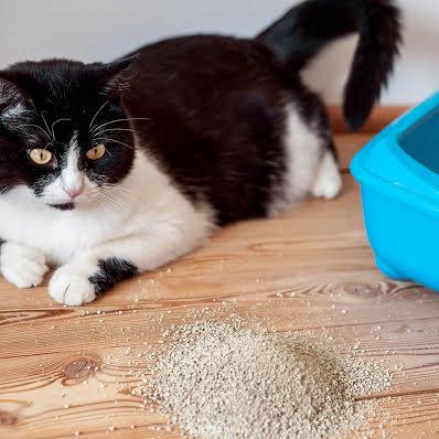 Kedi Kumu Çeşitleri