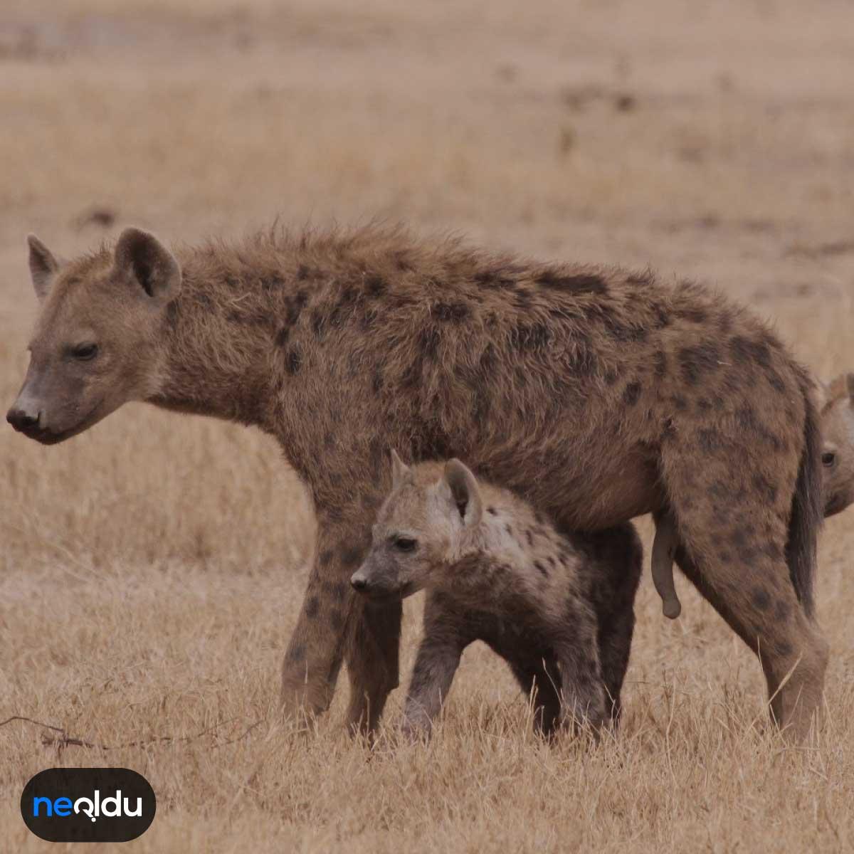Dünyada nesli tükenme tehlikesi olan hayvanlar