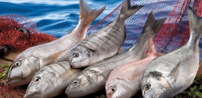 omega-3-kaynagi.png