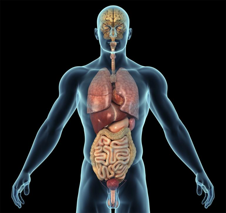 organlar.jpg