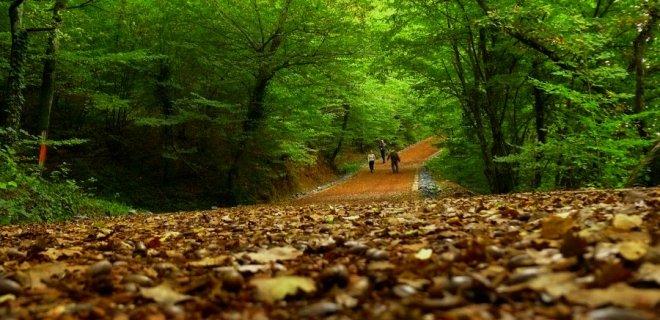 ormanda yürümek ve konsantrasyon