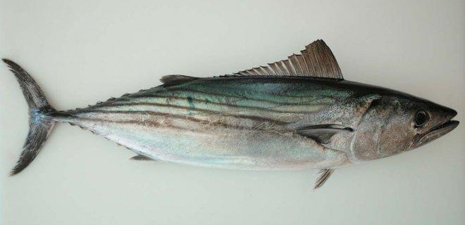 balık ve balık türleri