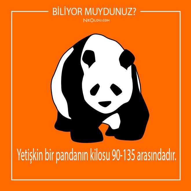 pandalar-hakkinda-inanilmaz-bilgiler-14.jpg