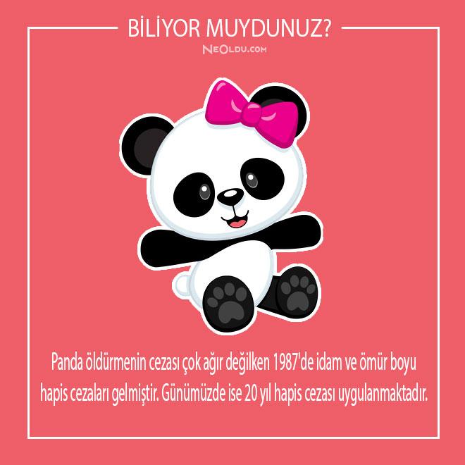 pandalar-hakkinda-inanilmaz-bilgiler-7.jpg