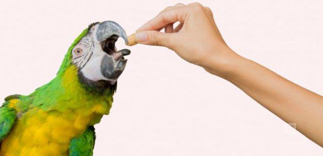 Papağanların Beslenmesi
