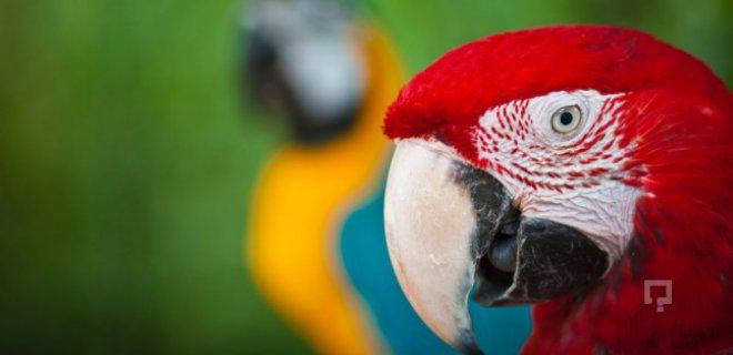 Papağanlara Konuşma Nasıl Öğretilir?