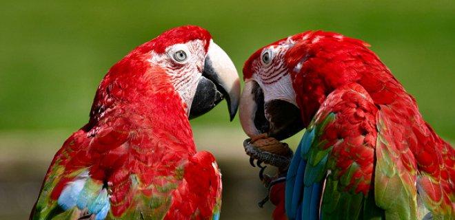 Sağlıklı Papağan