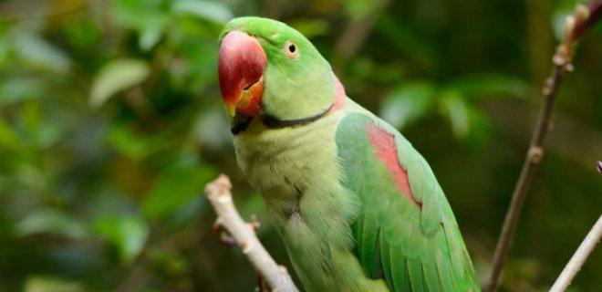 Papağanlarda Hastalık Belirtileri