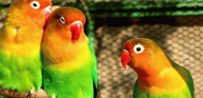 Papağanlarda Görülen Hastalıklar