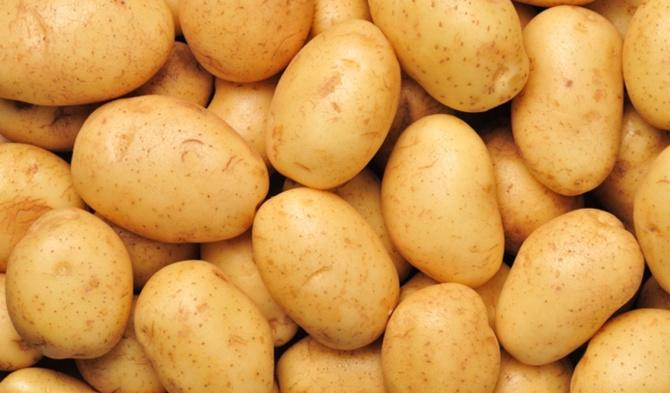 patates-002.jpg