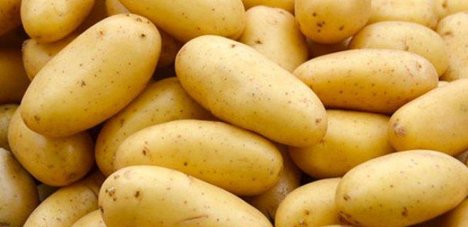 patates.Jpeg