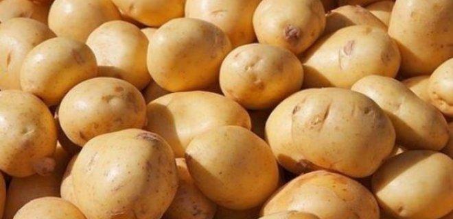 patates2.jpg
