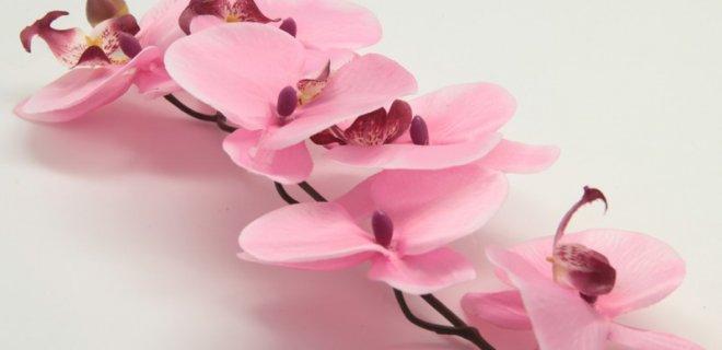 pembe-orkide.jpg