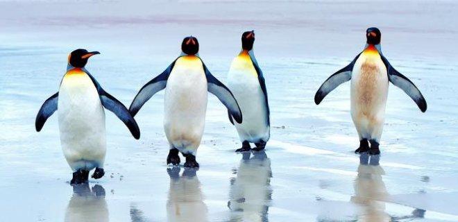 penguenler.jpg