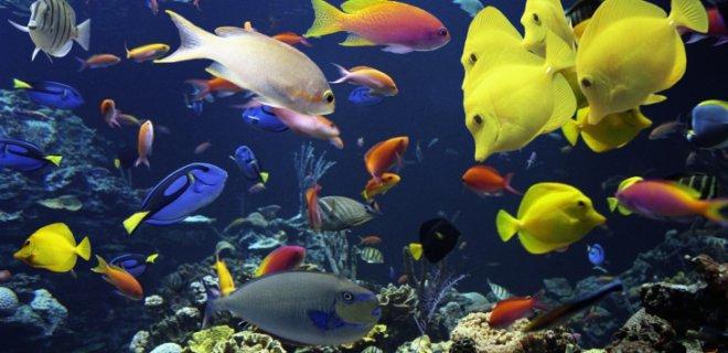 rengarenk balıklar