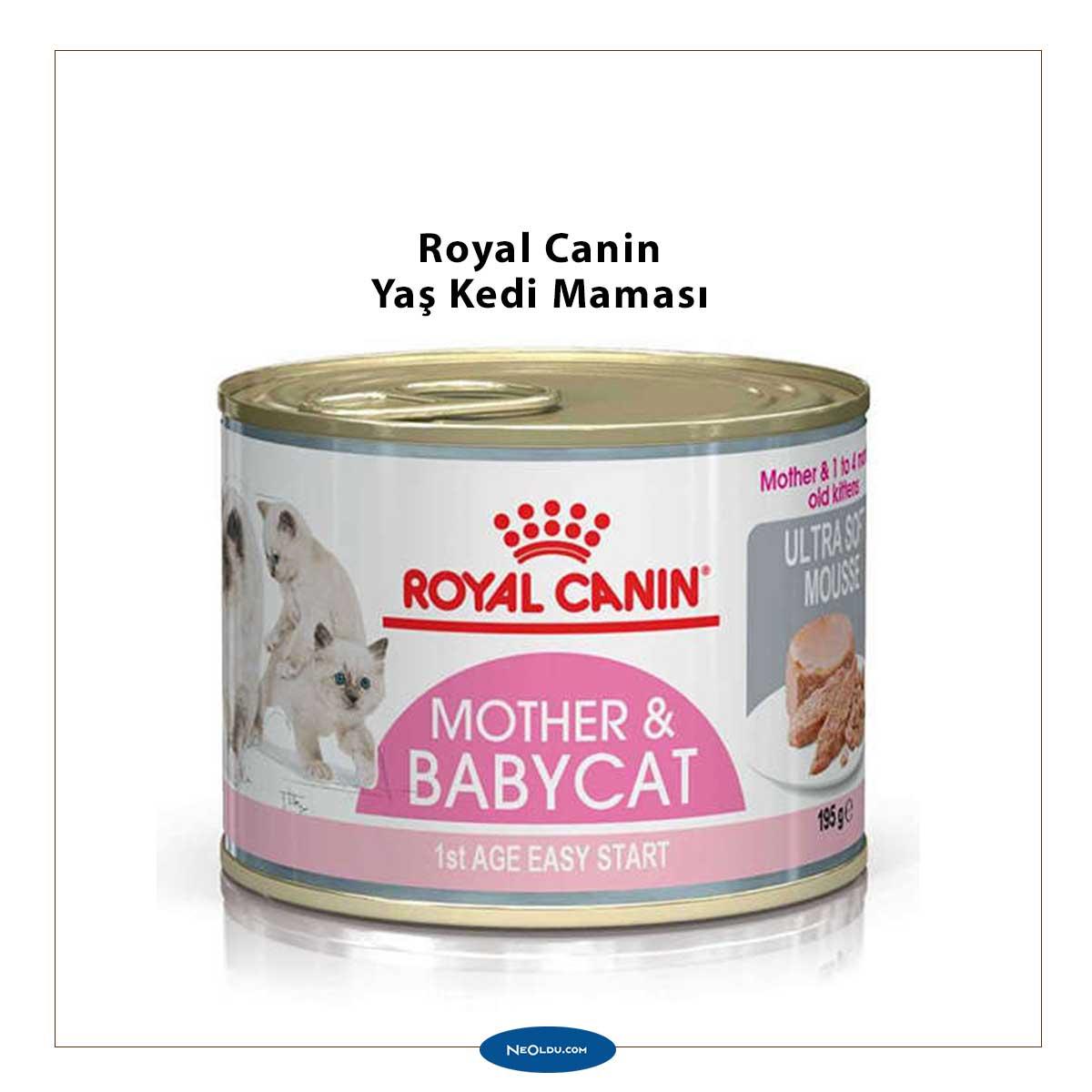 En İyi Yaş Kedi Maması Markaları