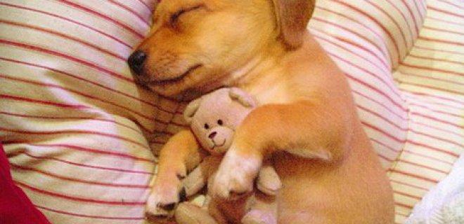 hayvanların rüya görmesi