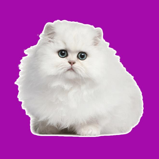 rüyada beyaz kedi görmek