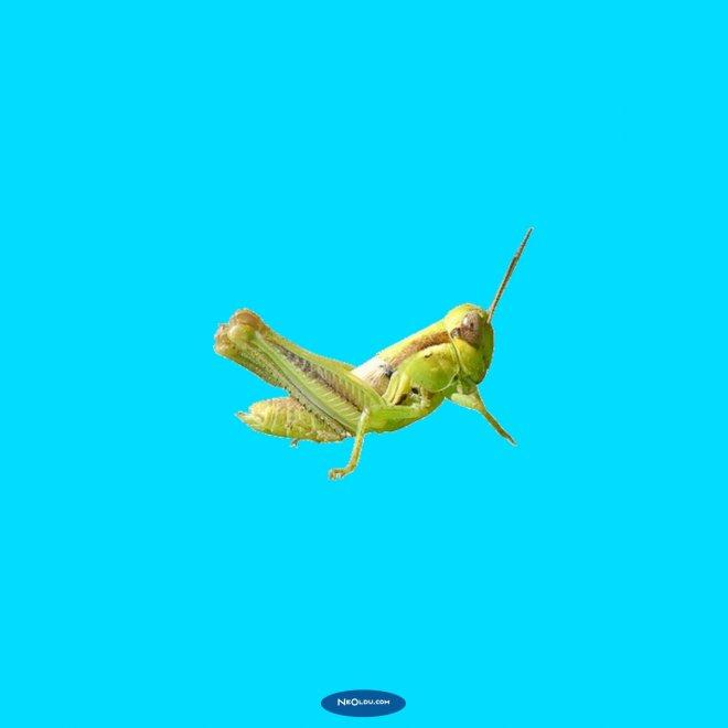 Rüyada Cırcır Böceği Görmek
