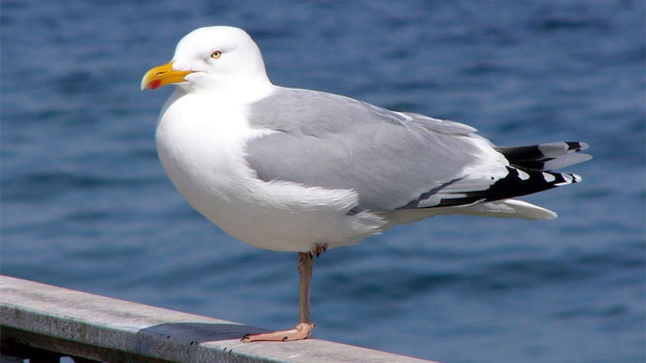 Rüyada güvercin görmek ne anlama gelir İslami