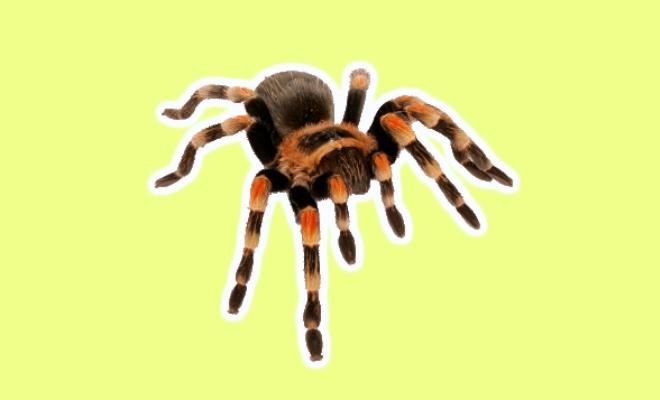 Rüyada Örümcek