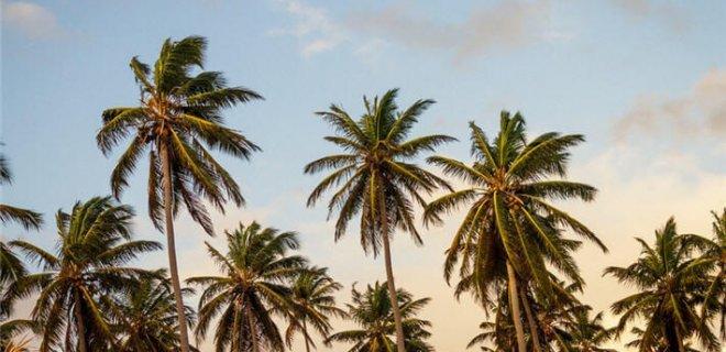 ruyada-palmiye-gormek.jpg