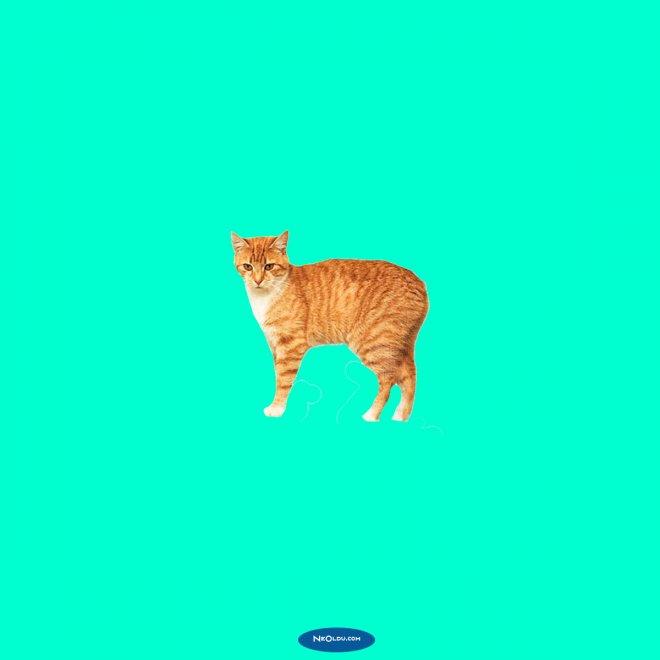 Rüyada Sarı Kedi Görmek