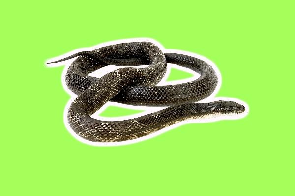 rüyada su yılanı görmek