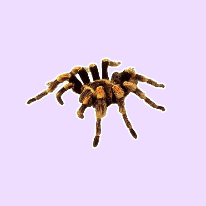 rüyada tarantula