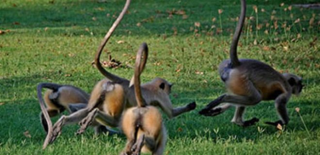 safaride-maymun-gozetmenligi.jpg