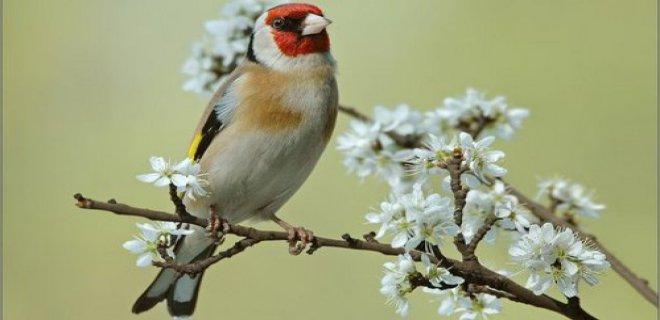 Saka Kuşu Kafesi Nasıl Olmalıdır?