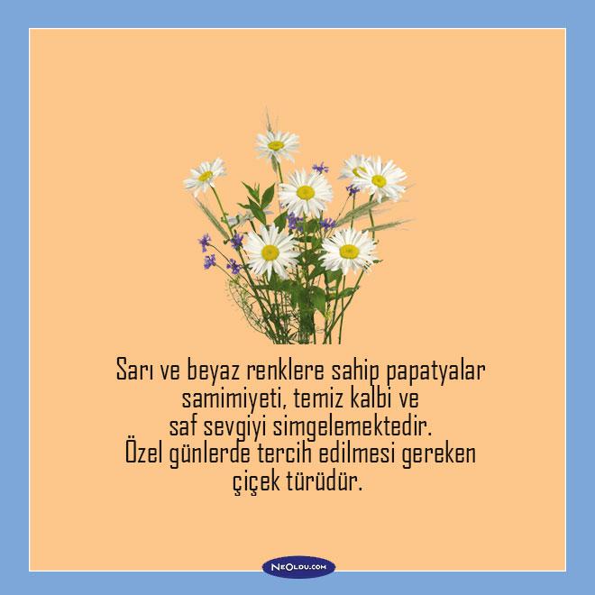 Sevgiliye alınabilecek çiçekler