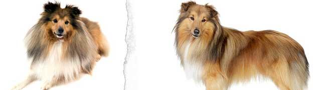 Köpek Cinsleri, Türleri ve Irk Özellikleri