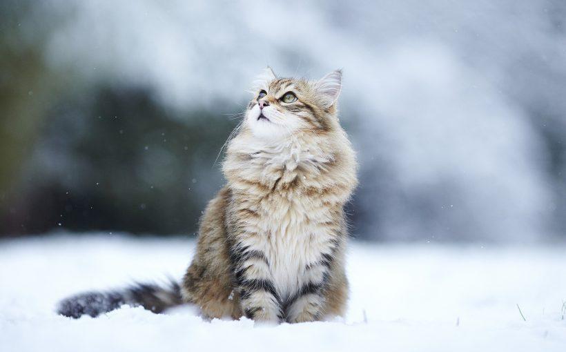 sibirya ve yakutistan hakkında bilinmesi gerekenler