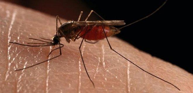 sıtma hastalığı