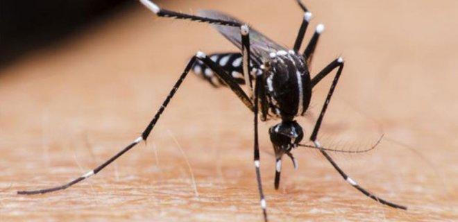 sivrisinek-nedir.jpeg