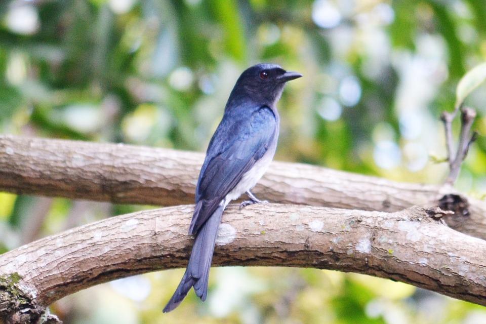 siya serçe kuşu
