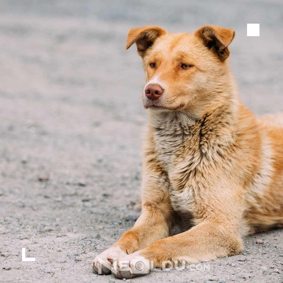 Sokak Köpekleri Ne Yer?