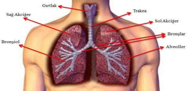 solunum-yolu-hastaliklari-cesitleri-ve-tedavi-yontemleri-005.jpg