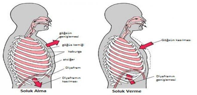 solunum-yolu-hastaliklari-cesitleri-ve-tedavi-yontemleri.JPG
