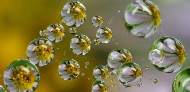 çiçekli su damlası