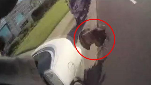 Sürücüyü Cezadan Hindi Kurtardı