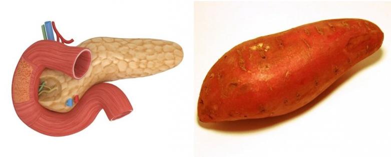tatli-patates---pankreas2.png