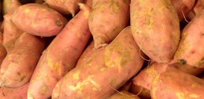 tatli-patates-011.jpg