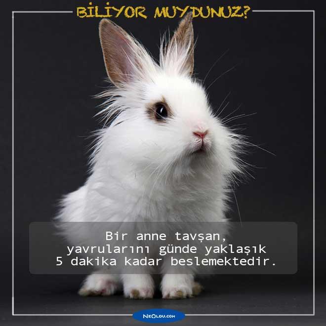 Tavşanlar Hakkında Bilinmeyen İlginç Bilgiler