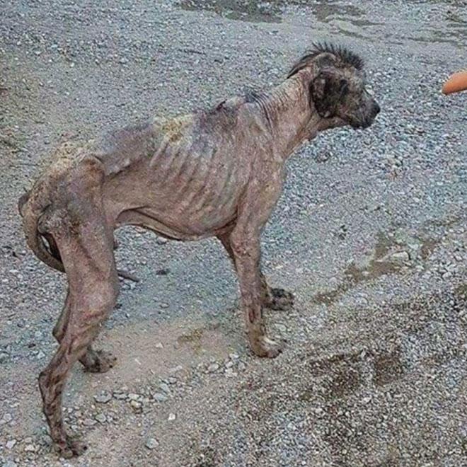 Terk Edilen Köpeğin İnanılmaz Değişimi