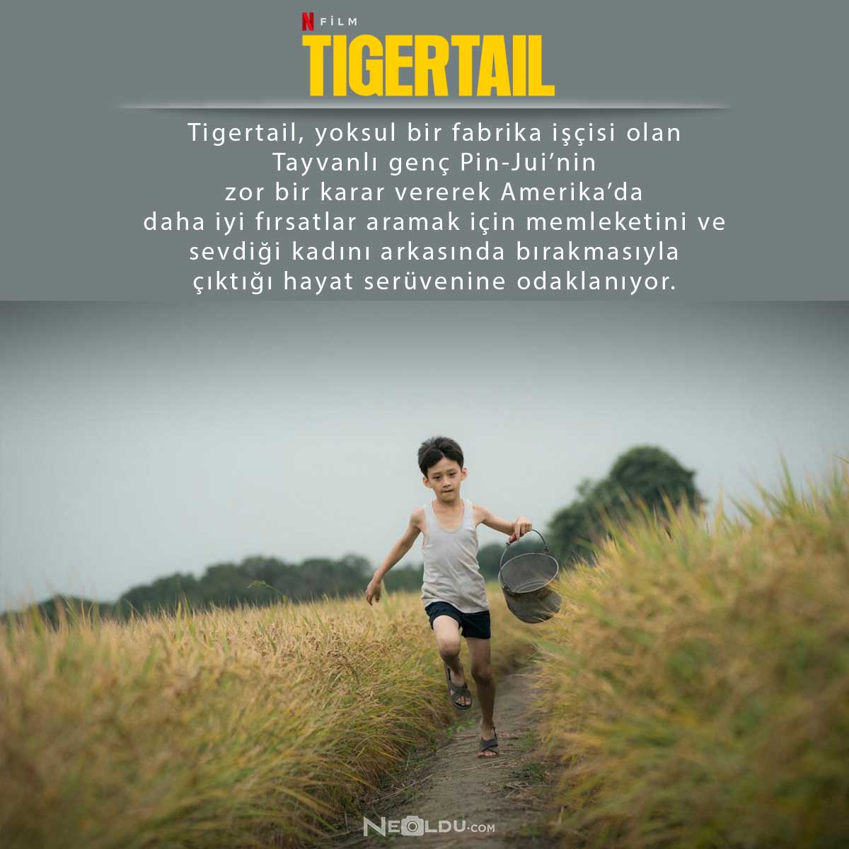 tigertail-filmi-hakkinda-bilgi.jpg